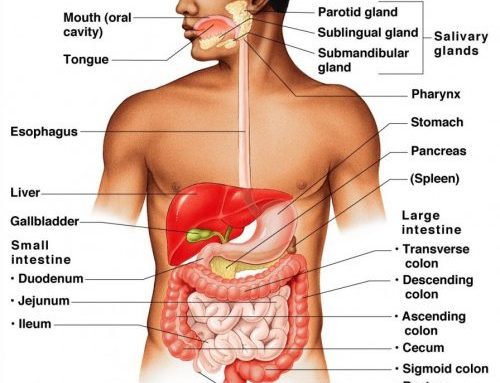 Improper Digestion Cause for Disease